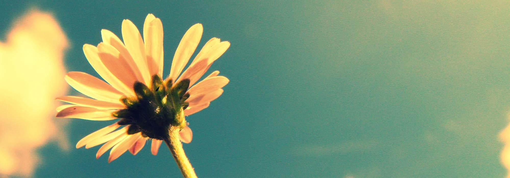 poletne-pocitnice-small